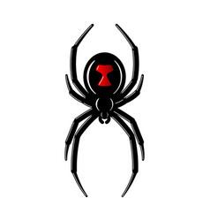 spider black widow red black bug spider 3d vector image