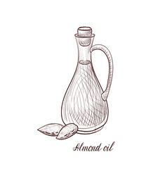 Drawing almond oil vector