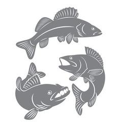 Fish perch vector