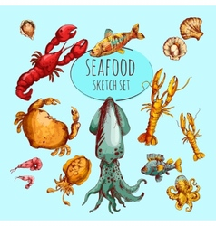 Seafood Sketch Colored vector image