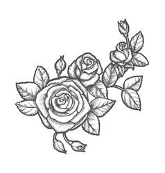 tattoo with rose flower sketch plant vector image