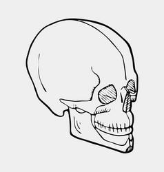 hand drawn black and white skull vector image