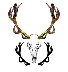 Color Sketch Deer Skull vector image