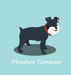 an depicting miniature schnauzer dog cartoon vector image