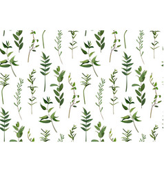 Eucalyptus and greenery different tree foliage vector