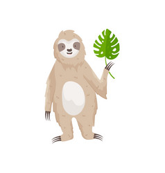 Little cute sloth with green leaf in paw isolated vector