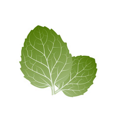 mint leaves vector image