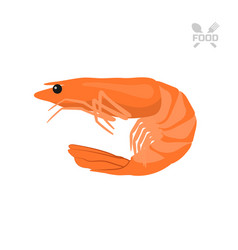 Orange shrimp on a white background seafood vector