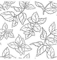 peppermint seamless pattern vector image