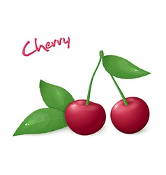 realistic isolated ripe cherry with leaves vector image