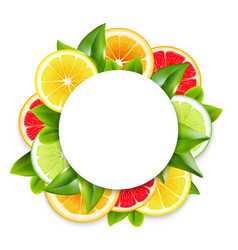 Citrus fruits slices arrangement round frame vector