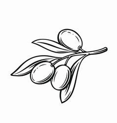 olive with leaves vector image vector image