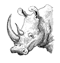 artwork rhinoceros sketch black and white drawing vector image