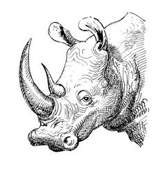 artwork rhinoceros sketch black and white drawing vector image