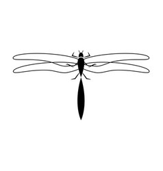 dragon fly insect vector image