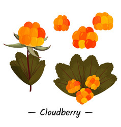 Simple collection cloudberry vector