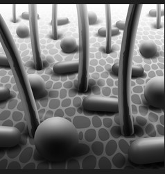 skin with bacteria vector image