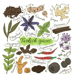 Colorful insulated set of local hand drawn herbs vector image vector image