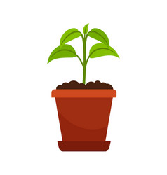 houseplant in flower pot vector image