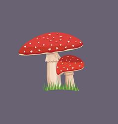 amanita mushroom with green grass vector image