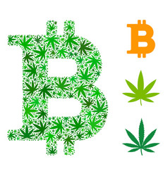 Bitcoin composition of weed leaves vector