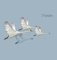 Drawing flying swans hand drawn vector