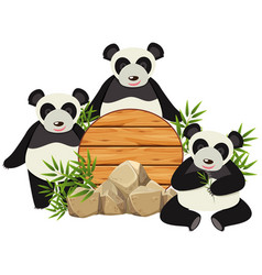 round board with three cute pandas vector image
