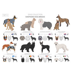 Shepherd and herding dogs collection isolated vector