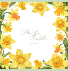 Spring watercolor frame with daffodil flowers vector