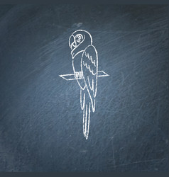 Macaw parrot icon sketch on chalkboard vector