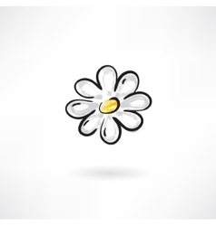 camomile flower vector image