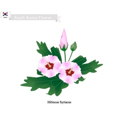 National Flower of South Korea Hibiscus Syriacus vector image
