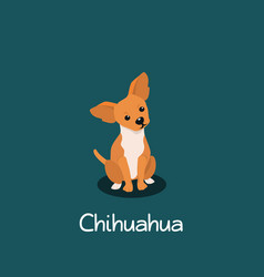 An depicting chihuahua dog cartoon vector