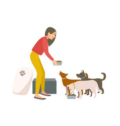 friendly female volunteer feeding dogs in animal vector image