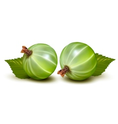 Green gooseberries vector