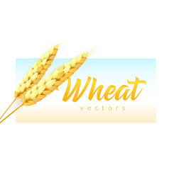 two realistic wheat spikelets with wheat lettering vector image