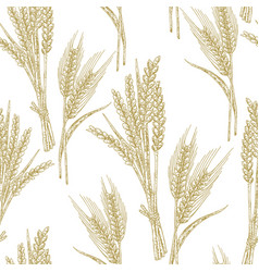 wheat seamless pattern in sketch vector image