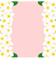 white plumeria border vector image