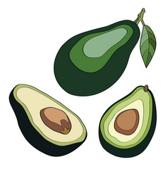 whole avocado with leaf and half with seed vector image