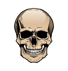 Colored human skull with jaw vector