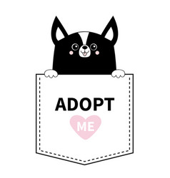Adopt me black chihuahua dog in pocket vector