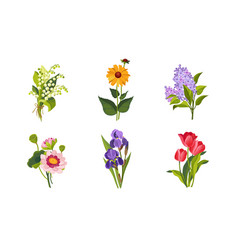 beautiful flowers set lily valley lilac vector image