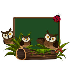 chalkboard with three owls vector image