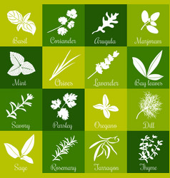Herbs hand drawn big icon squared set vector