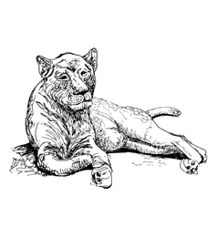 Original artwork old lioness black sketch drawing vector
