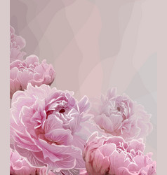 Pink background with pink peony blossoming flowers vector