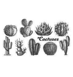 collection desert plants cactus set vintage vector image