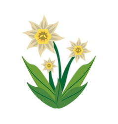 Daffodil flower spring image vector