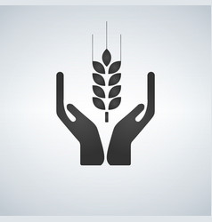 Hands holding a wheat plant icon vector