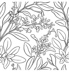 Sage seamless pattern vector